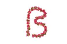 Bloemenslinger Fuchsia